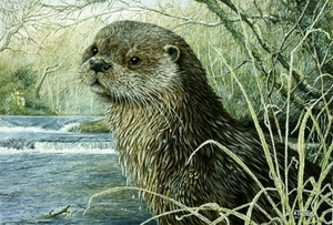 First Frost - Dog otter