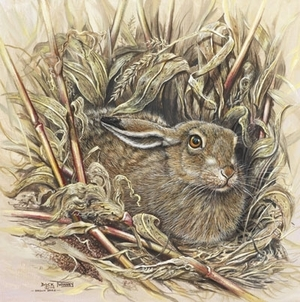 Brown hare in maize field