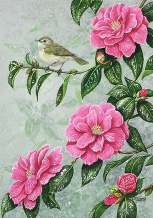 Spring Rain - Chiffchaff and Camellia