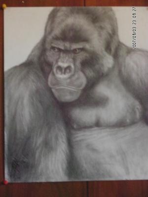 \Silverback Mountain Gorilla