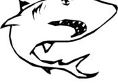 Colorear-dibujo-tiburon-blanco-thumb