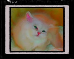 Fairy Persian Cat