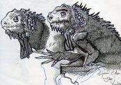Black_iguanas-thumb