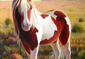 Southwest_wild_pony-thumb