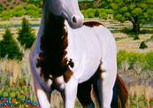 Wallis_1_hill_country_stallion-thumb