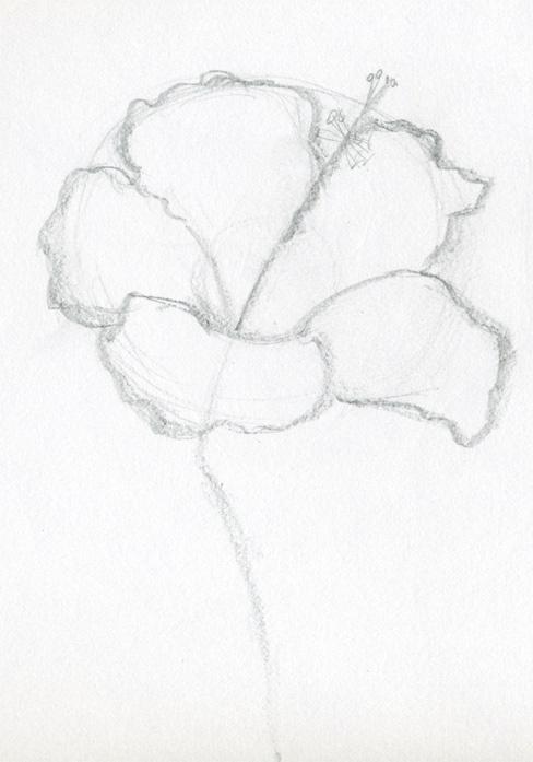 Drawings-of-hibiscus-flowers02-normal