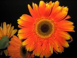 Bright_orange-normal