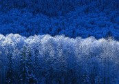 Winter-thumb