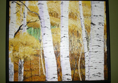 Birch_trees-thumb