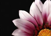 Closeup_flower-thumb