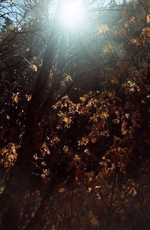 autumn sun