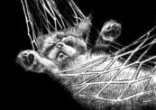 Cat_004-thumb