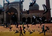 The_birds_of_jama_masjid-thumb