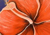Red_hibiscus_small_format-thumb
